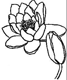 Buskerud Botaniske Forening